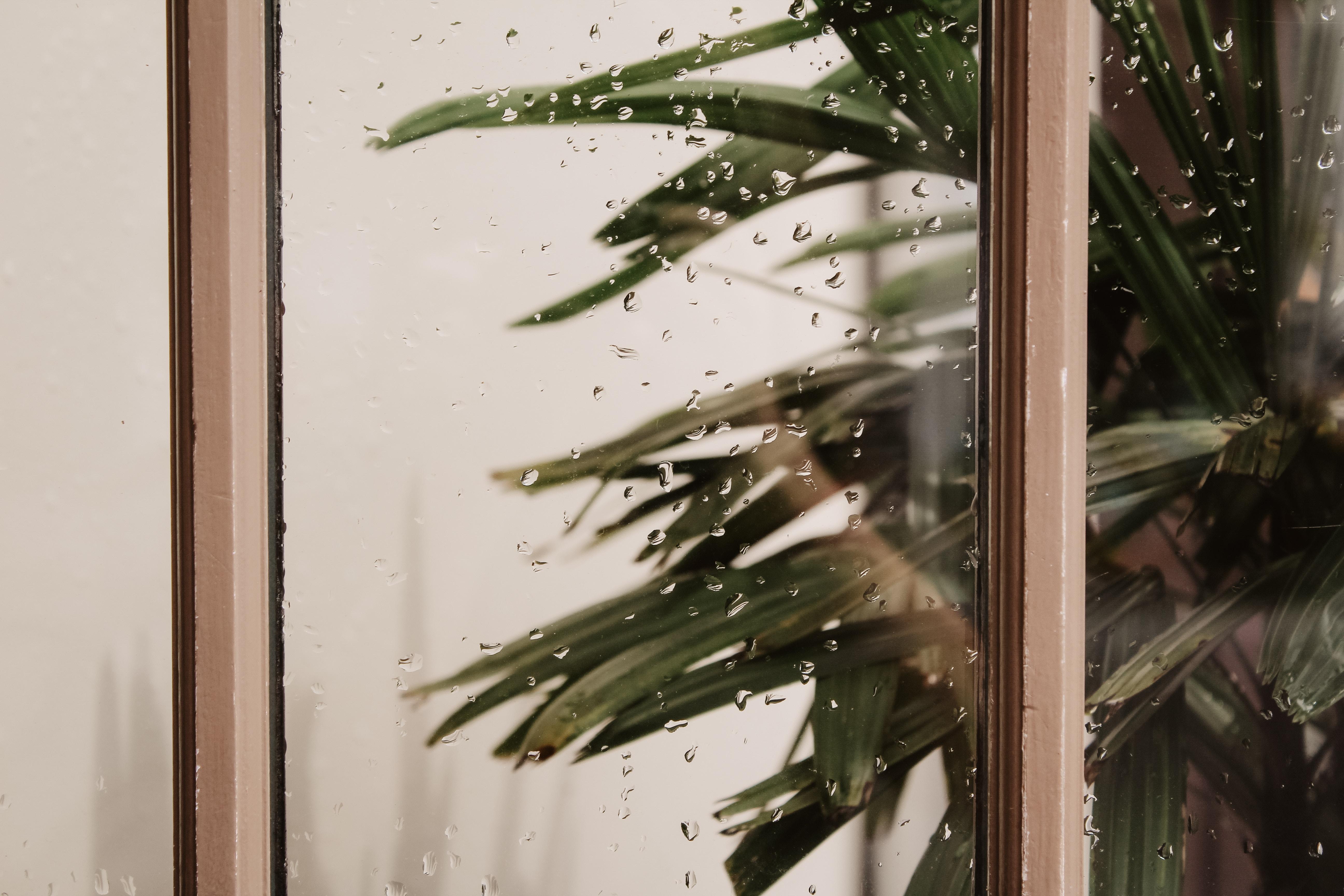 הגנה לגינה ובמרפסת מגשמים